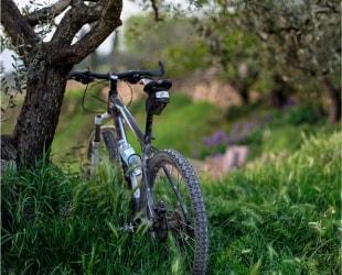 Wycieczki rowerowe po szlakach Koniecpola i okolic